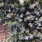 モンゴルで風邪をひいたら、朝の草原を裸足で歩くと治る